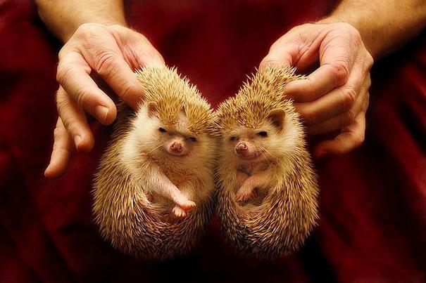 animales gemelos 6