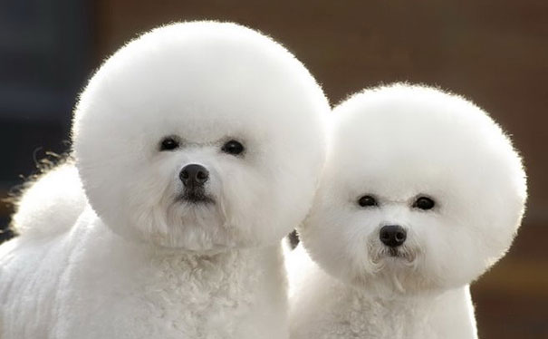 animales gemelos 7