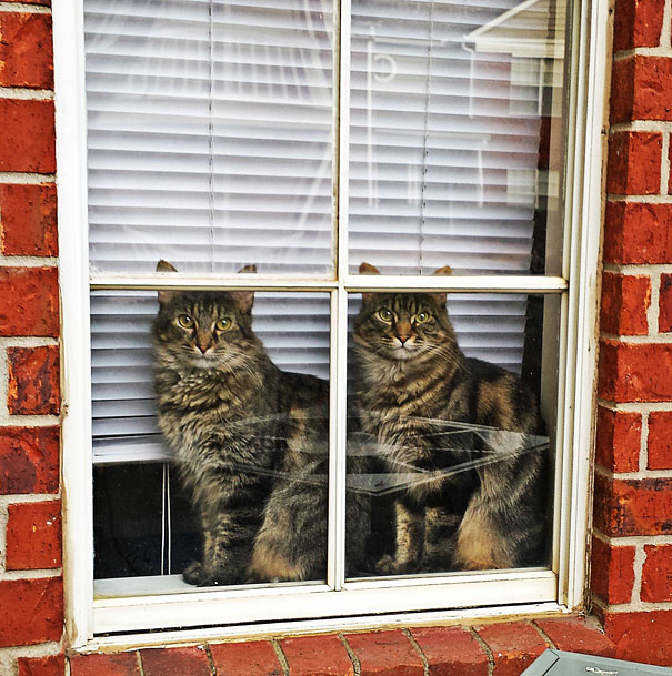 animales gemelos