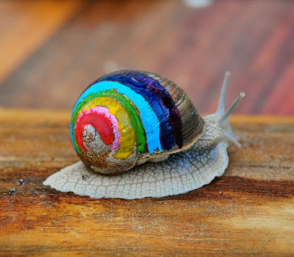 caracol concha pintada