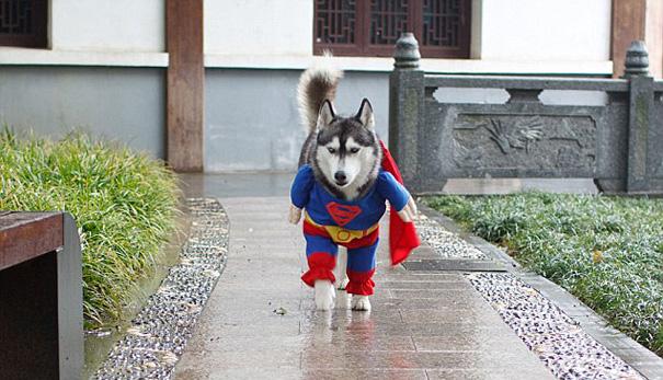 disfraces halloween mascotas 10