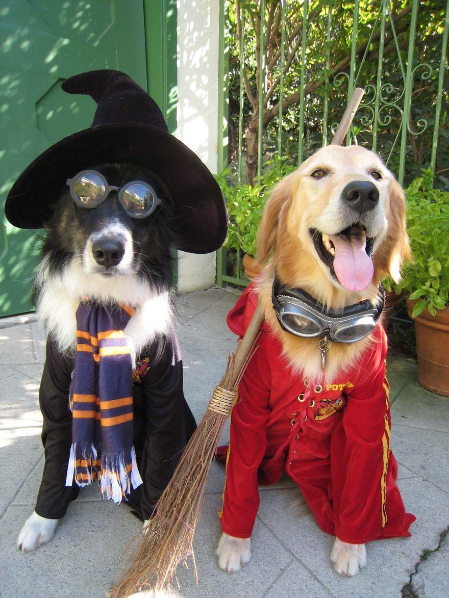 disfraces halloween mascotas 13