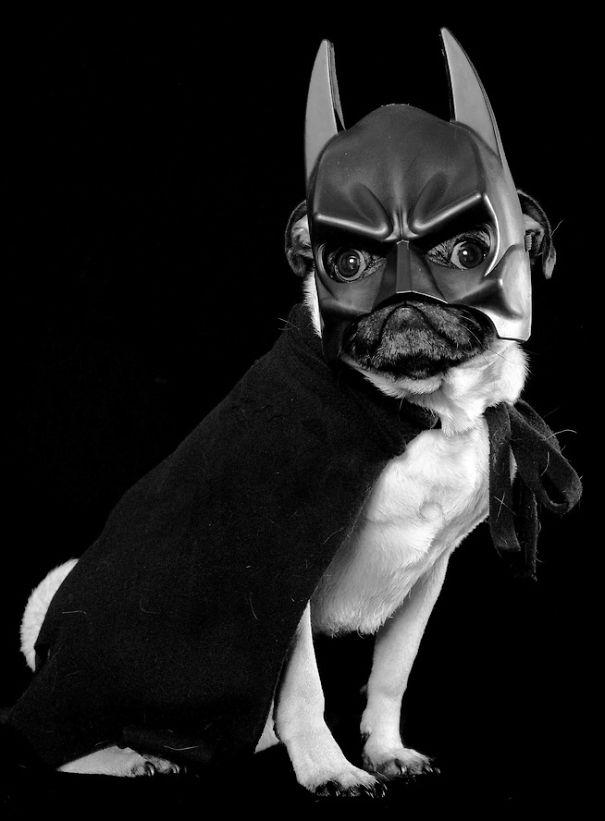 disfraces halloween mascotas 14