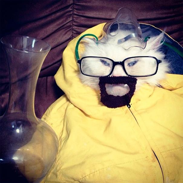 disfraces halloween mascotas 17