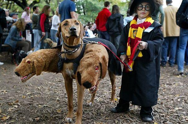 disfraces halloween mascotas 19