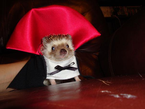 disfraces halloween mascotas 2