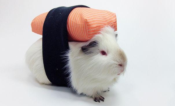 disfraces halloween mascotas 21