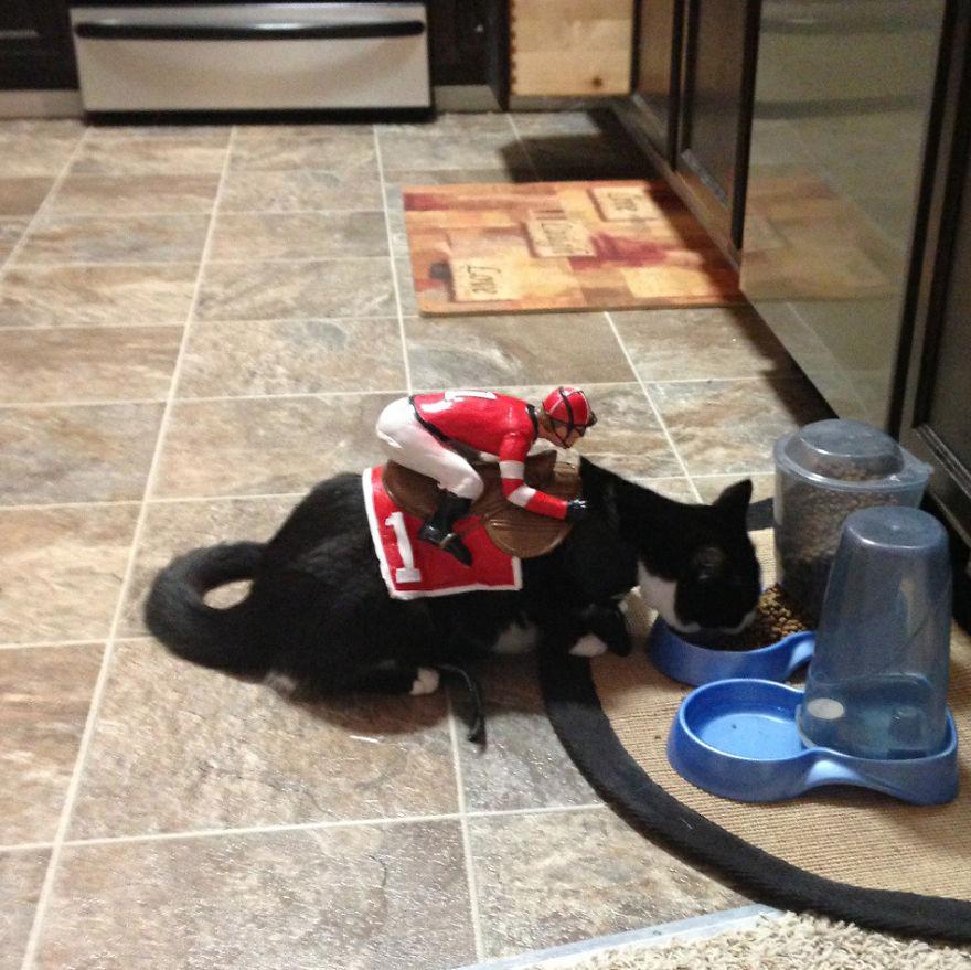 disfraces halloween mascotas 25