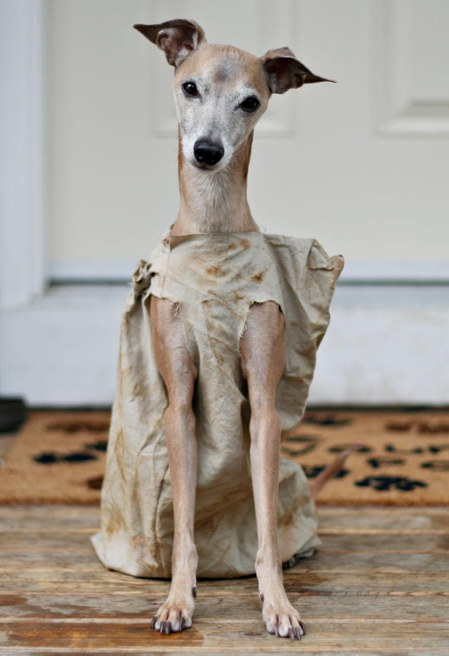 disfraces halloween mascotas 26