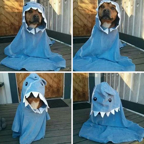 disfraces halloween mascotas 27
