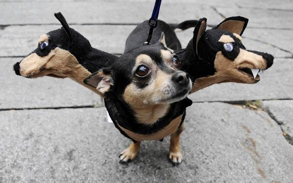disfraces halloween mascotas 3