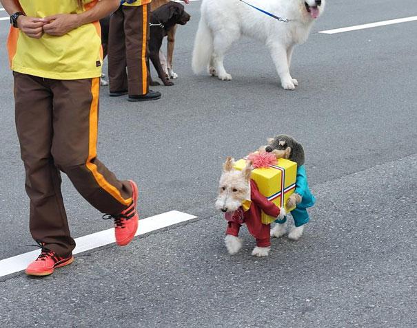 disfraces halloween mascotas 4