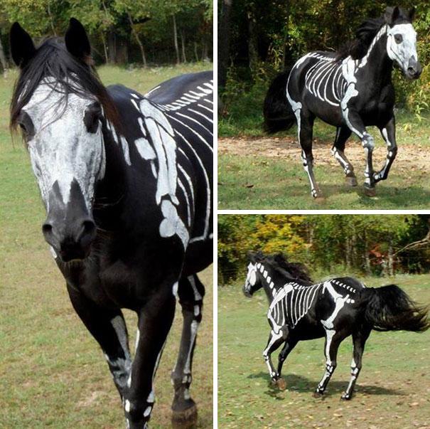 disfraces halloween mascotas 6