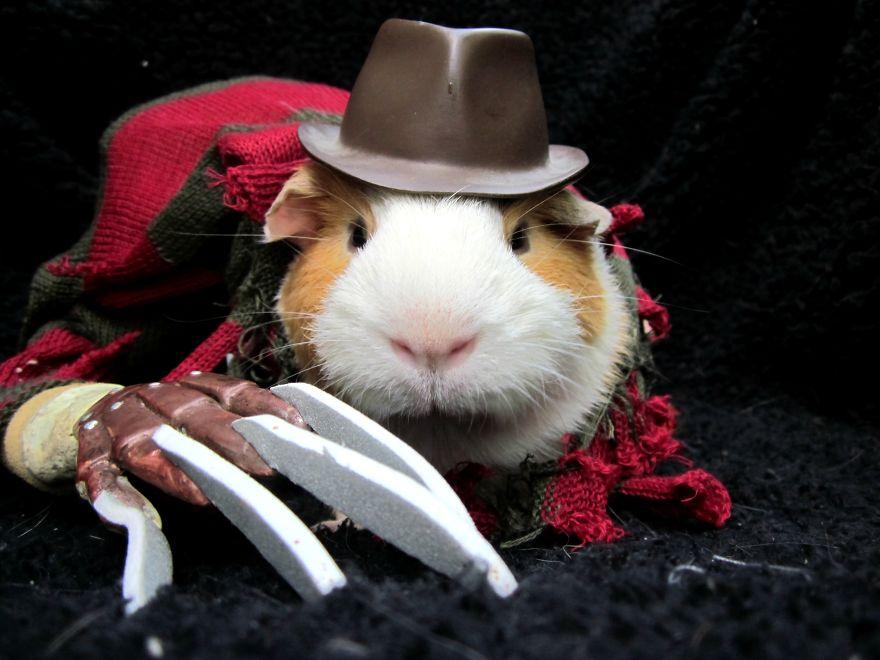 disfraces halloween mascotas 7