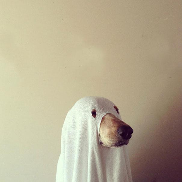 disfraces halloween mascotas 8