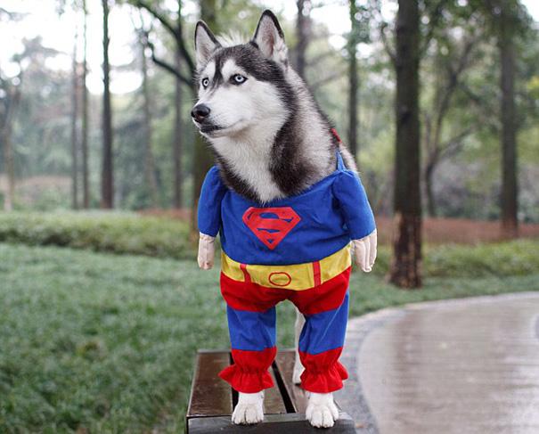 disfraces halloween mascotas 9