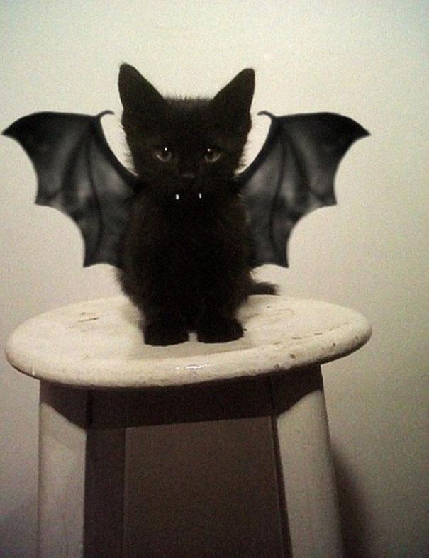 disfraces halloween mascotas