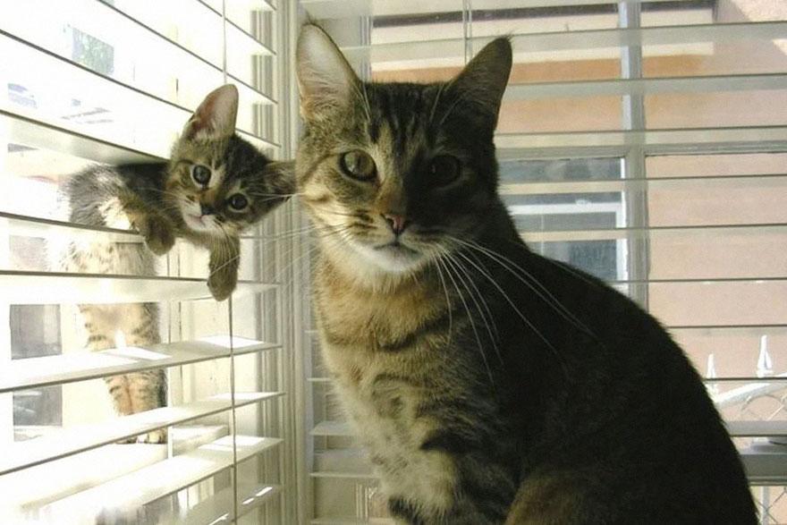 familias animales 11