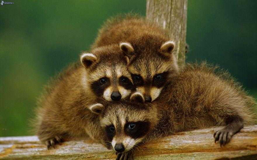 familias animales 16