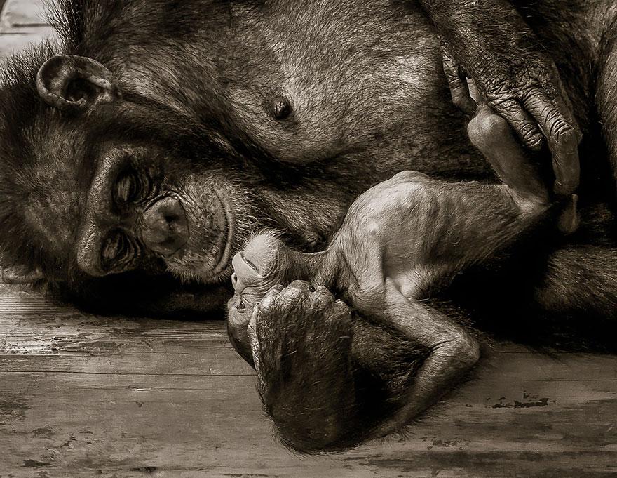 familias animales 17
