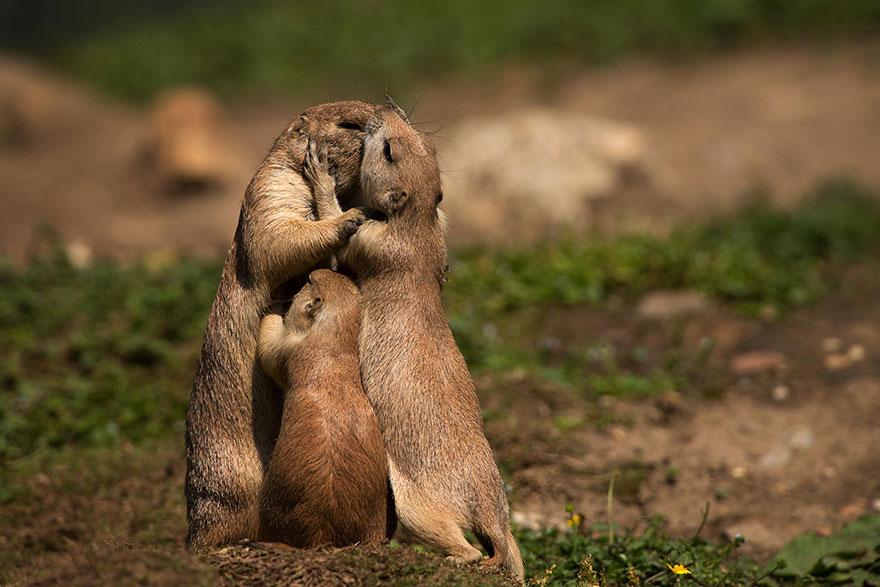 familias animales 2