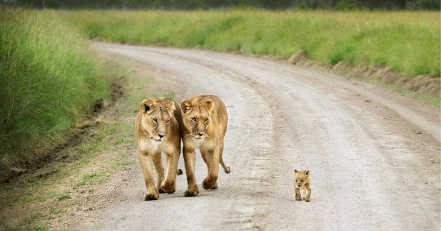 familias animales 3