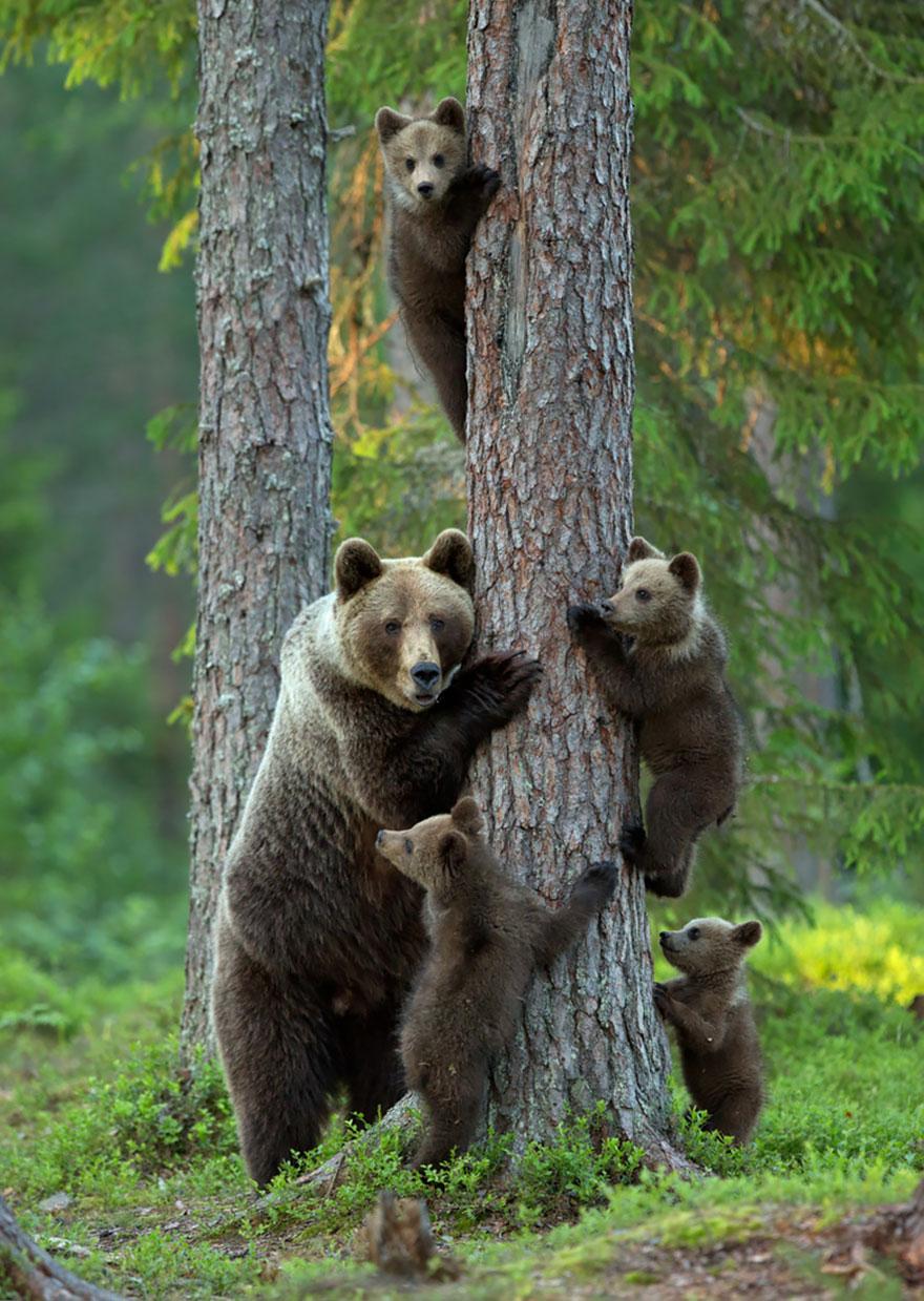 familias animales 4