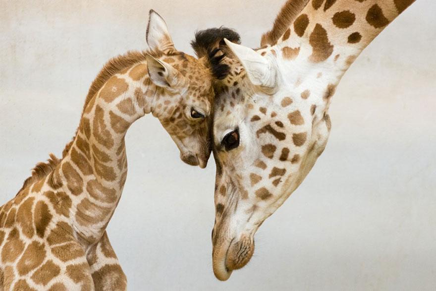 familias animales 6
