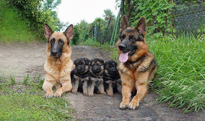 familias animales 7