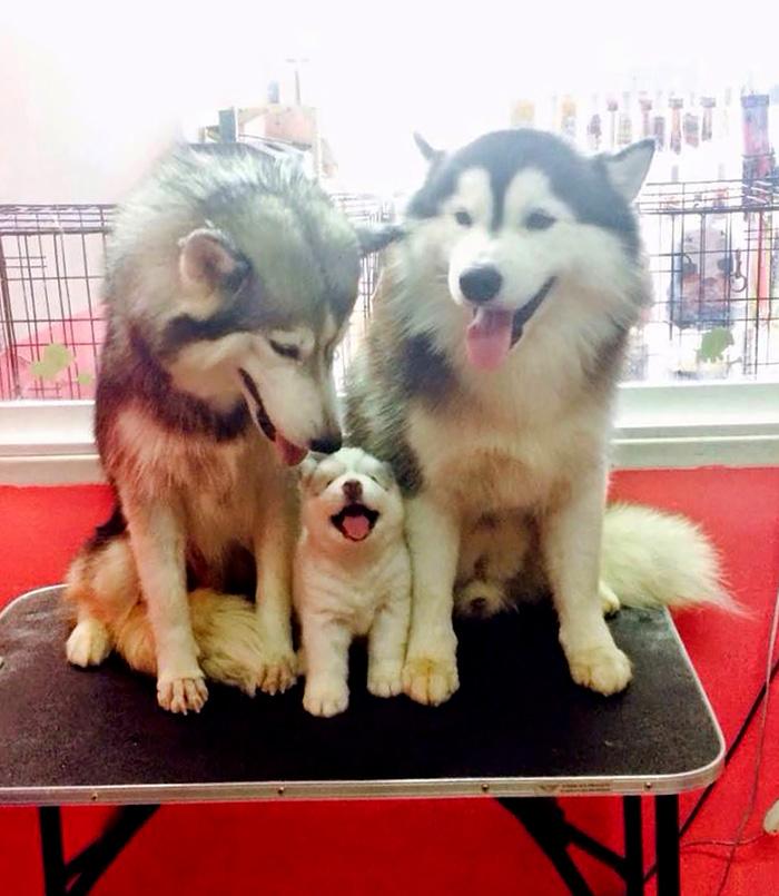 familias animales 9