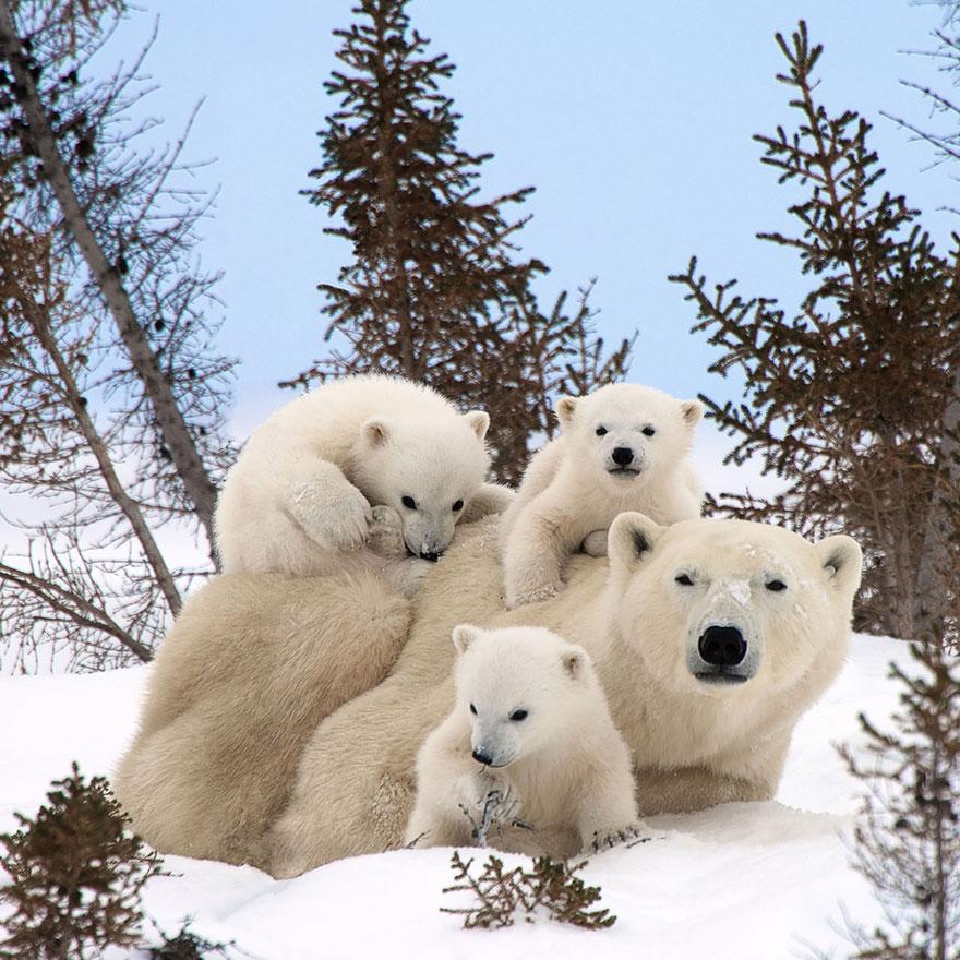 familias animales