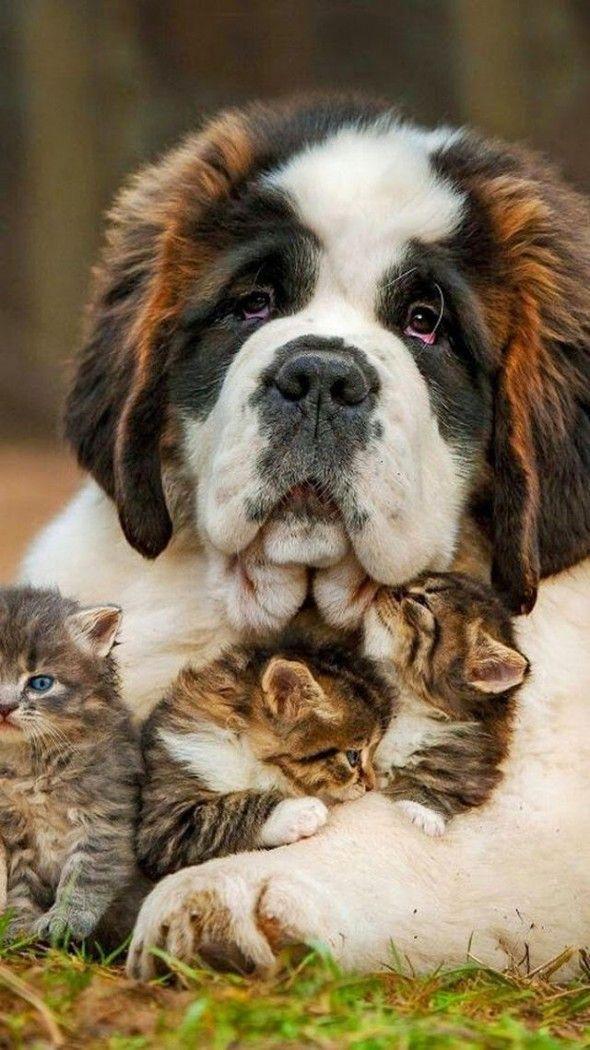 gatitos al cuidado de un perro bonachon