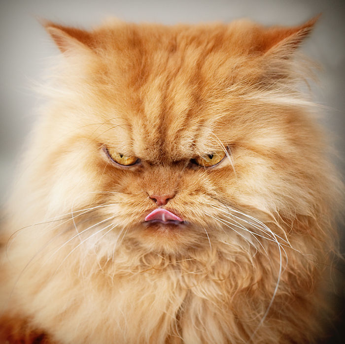 gato enfadado 11