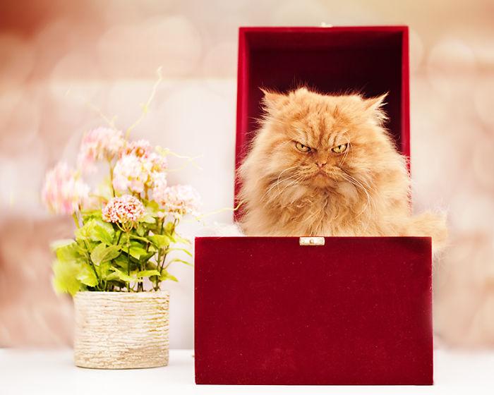 gato enfadado 12