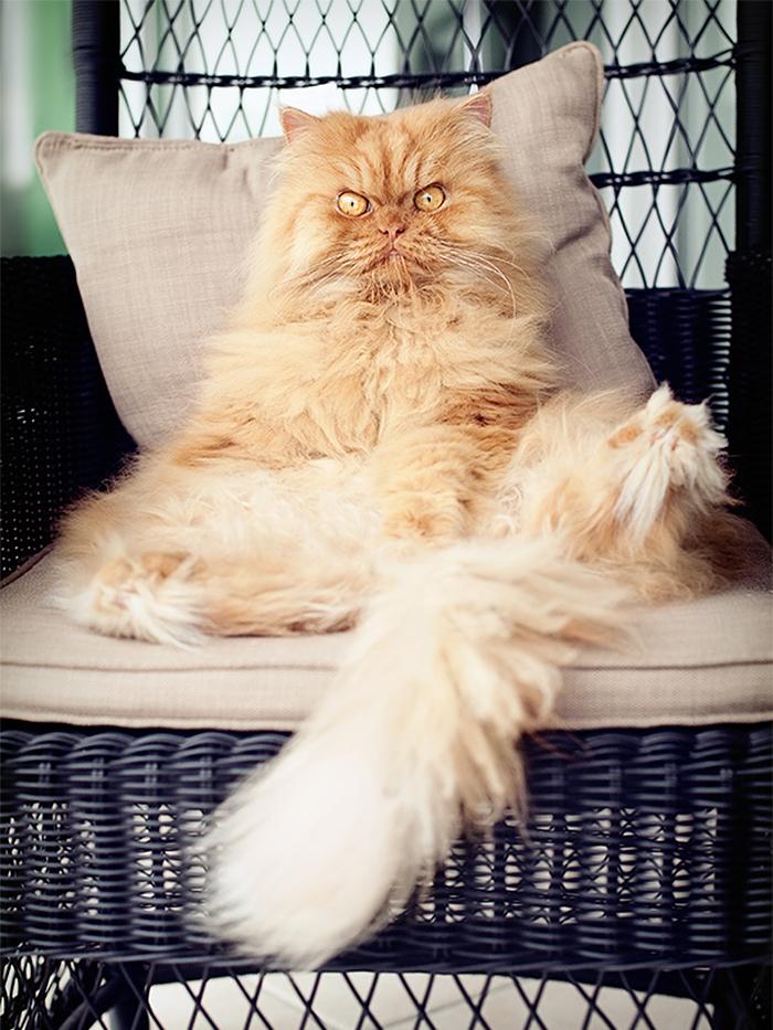 gato enfadado 13