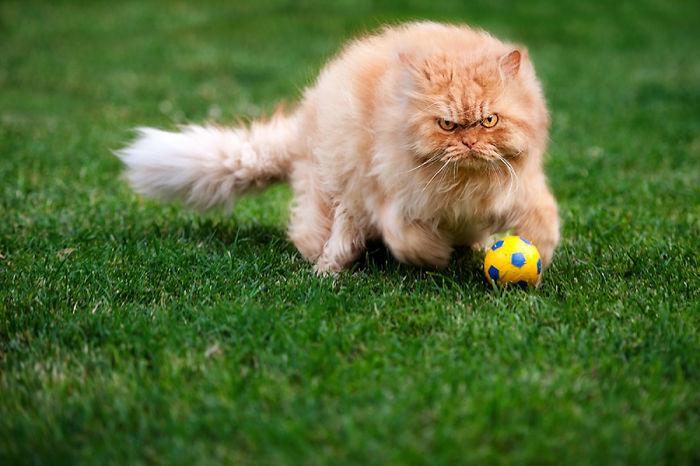 gato enfadado 14