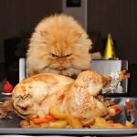 El gato más enfadado del mundo