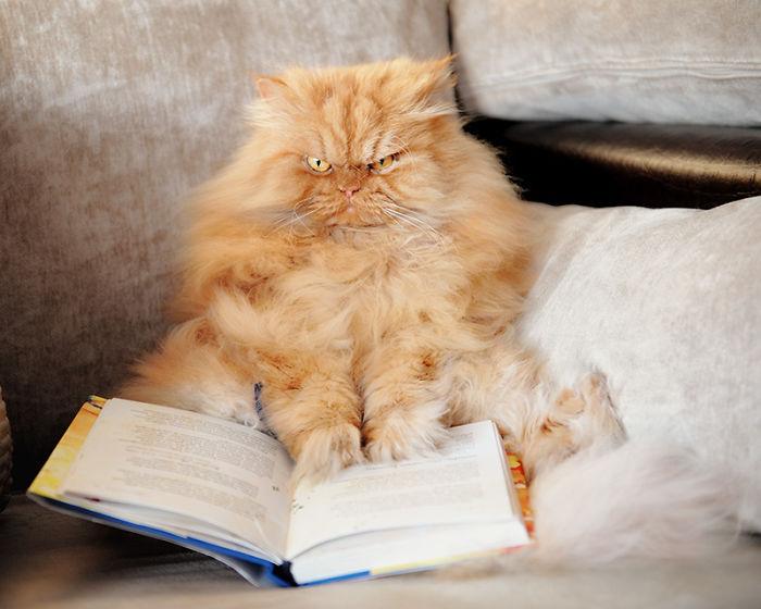 gato enfadado 17