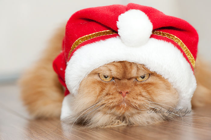gato enfadado 18