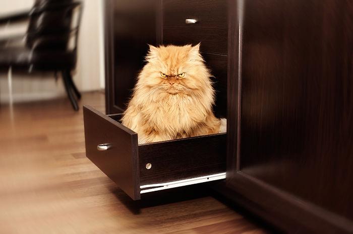 gato enfadado 2