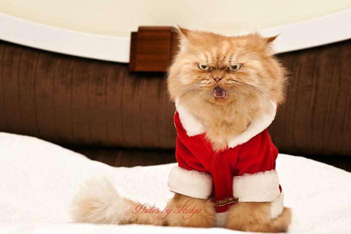 gato enfadado 20