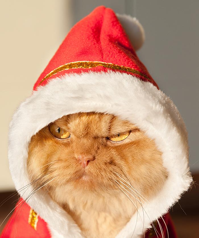 gato enfadado 9
