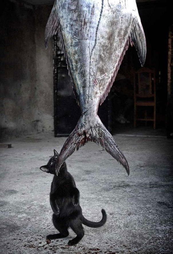 gatos manos en la masa 11