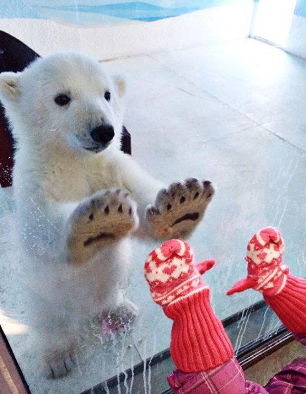 oso polar con ganas de jugar