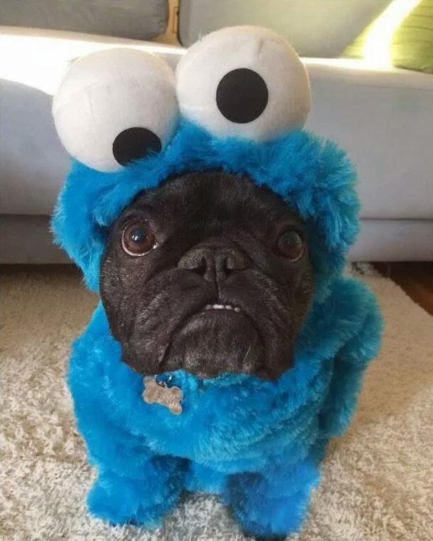 perro monstruo de las galletas