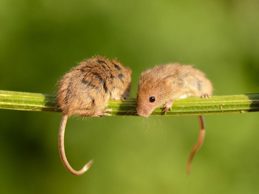 ratones graciosos 10