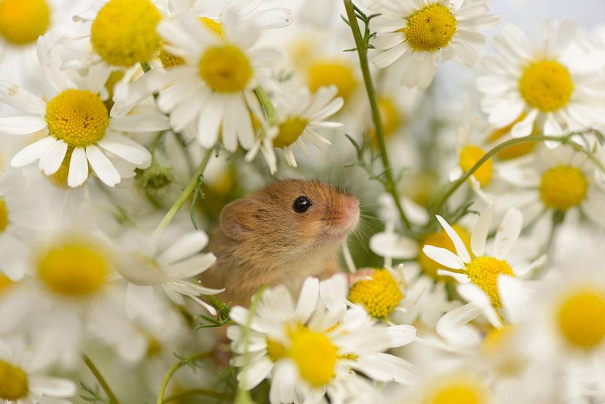 ratones graciosos 12