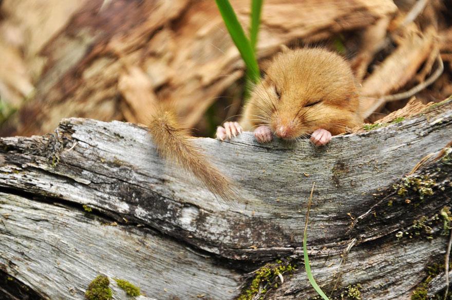 ratones graciosos 14