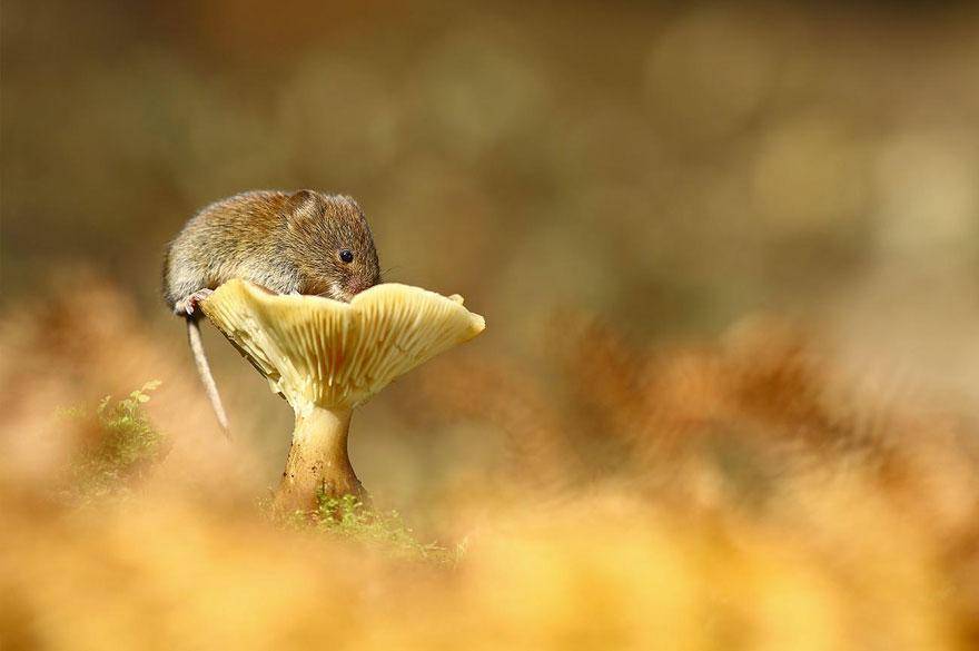 ratones graciosos 15