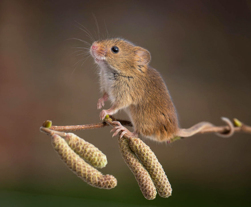 ratones graciosos 18